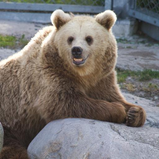 Twitter photo of @Bear4Mayor