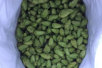 Hop Farms Bloom Around Craft Boom